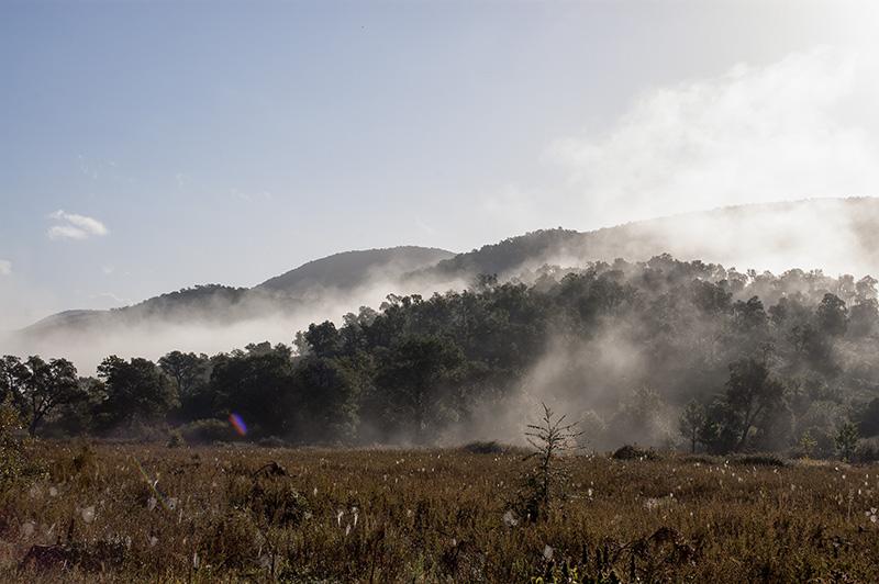 Korkplantagen am Morgen in der Provence